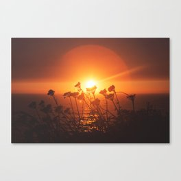 Sunsets and Weeds Canvas Print