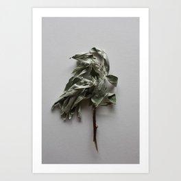 Olea twig herbal wall art Art Print