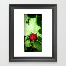 Wild Berry Framed Art Print