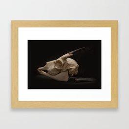 White Tail Deer Skull Framed Art Print