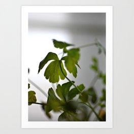 Parsley by the Window Art Print