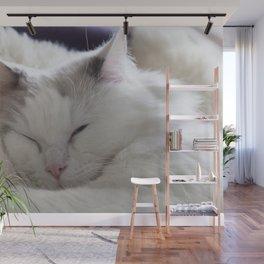 Ragdoll Cat Cuddles Wall Mural