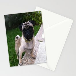 Pancho Posing in Garden Stationery Cards