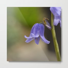 Soft Blue Metal Print
