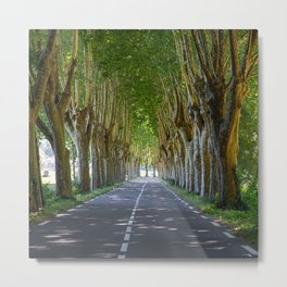 Tunnel Of Trees Roadway Canopy Metal Print