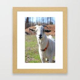 Billy The Goat Framed Art Print