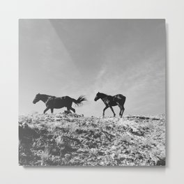 Pryor Mountain Wild Mustangs Metal Print