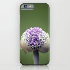 Starting Allium iPhone 6s Slim Case