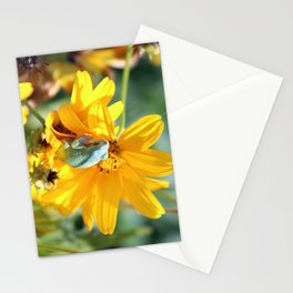 Froggy Floral Stationery Cards