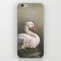 bath iPhone & iPod Skins featuring The bath by Pauline Fowler ( Polly470 )