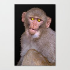 Young Rhesus Macaque Paintover Effect Canvas Print
