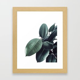 Ficus Elastica #13 #decor #art #society6 Framed Art Print