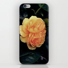 Yellow Rose iPhone & iPod Skin
