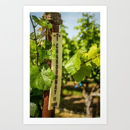 Chardonnay Art Print