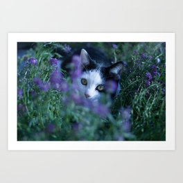 Just another kitty among the flowers Art Print