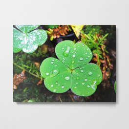 Cloverleaf with waterdrops Metal Print