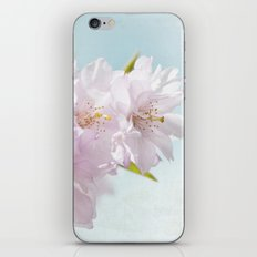 Spring Cherry iPhone & iPod Skin