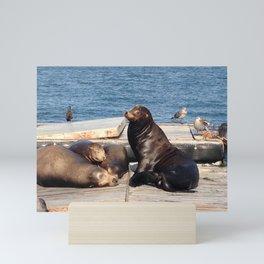 Sea Lions in San Diego Mini Art Print
