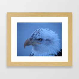 Young Eagle in Failing Light Framed Art Print