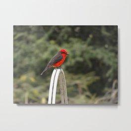 Bird, Peru Metal Print