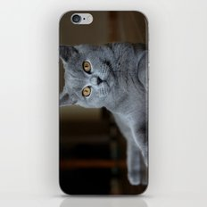 Diesel the cat 1 iPhone & iPod Skin