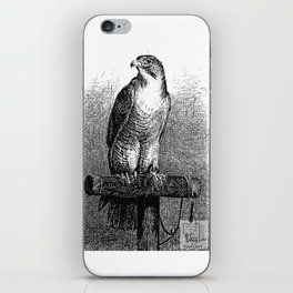 Peregrine Falcon iPhone Skin