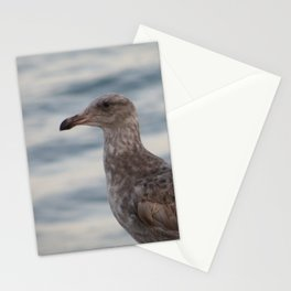 Young Gull in Malibu Stationery Cards