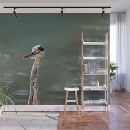Grey Egret close up Wall Mural