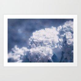 Grace and Beauty Defined a blue Hydrangea flower Art Print