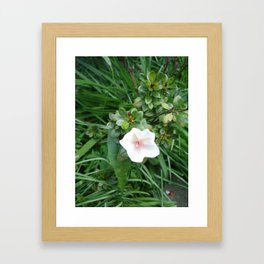 soft pink flower Framed Art Print