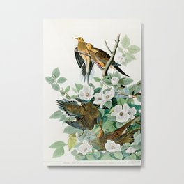 Carolina Turtle Dove, Birds of America by John James Audubon Metal Print