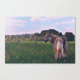 Czech Wolfdog Vintage Canvas Print
