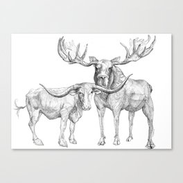 Longhorn and Moose Canvas Print