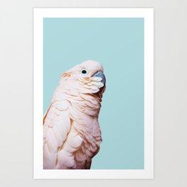 Parrot Photography | Pink Bird |  Tropical | Exotic | Turquoise Art | Blush Pink Art Print