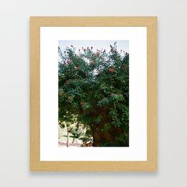 Red Flowers at El Parc de la Ciutadella Framed Art Print