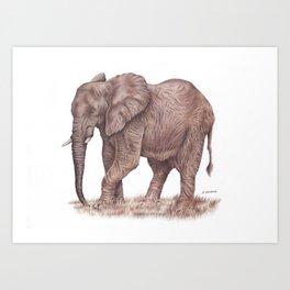 Elephant colored pencil drawing Art Print