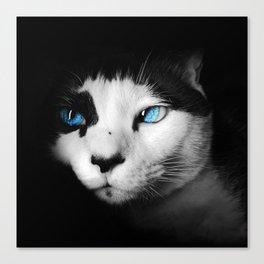 Feline darkness Canvas Print