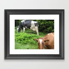 Cows 1 Framed Art Print