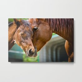 Momma Horse Embraces Her Colt Metal Print