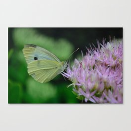 Green Butterfly Pink Flower Canvas Print