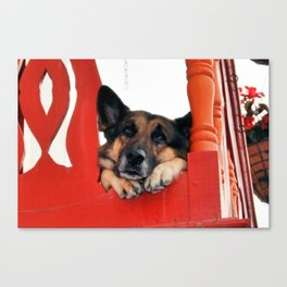 Sad Dog In Red Balcony. Closer Photo Canvas Print
