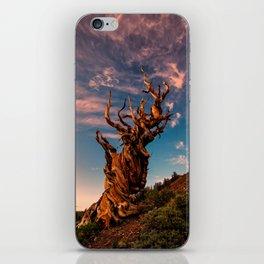 Bristlecone Pine, White Mountains, California iPhone Skin