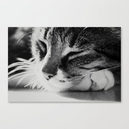 Portrait of a cat in black and white Canvas Print