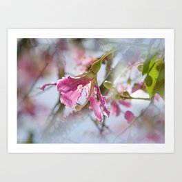 Dreamy Pink Flower Art Print