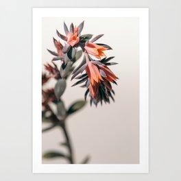 Summer Succulent #2 Art Print