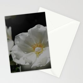 White Roses On Black Stationery Cards