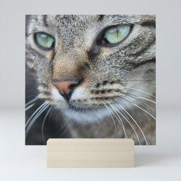 Thoughtful Cat Mini Art Print