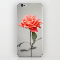 GUATEMALA ROSE iPhone & iPod Skin
