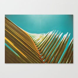 Palm Leaf in Detail Canvas Print