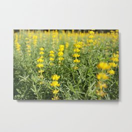 Flower Photography by MChe Lee Metal Print